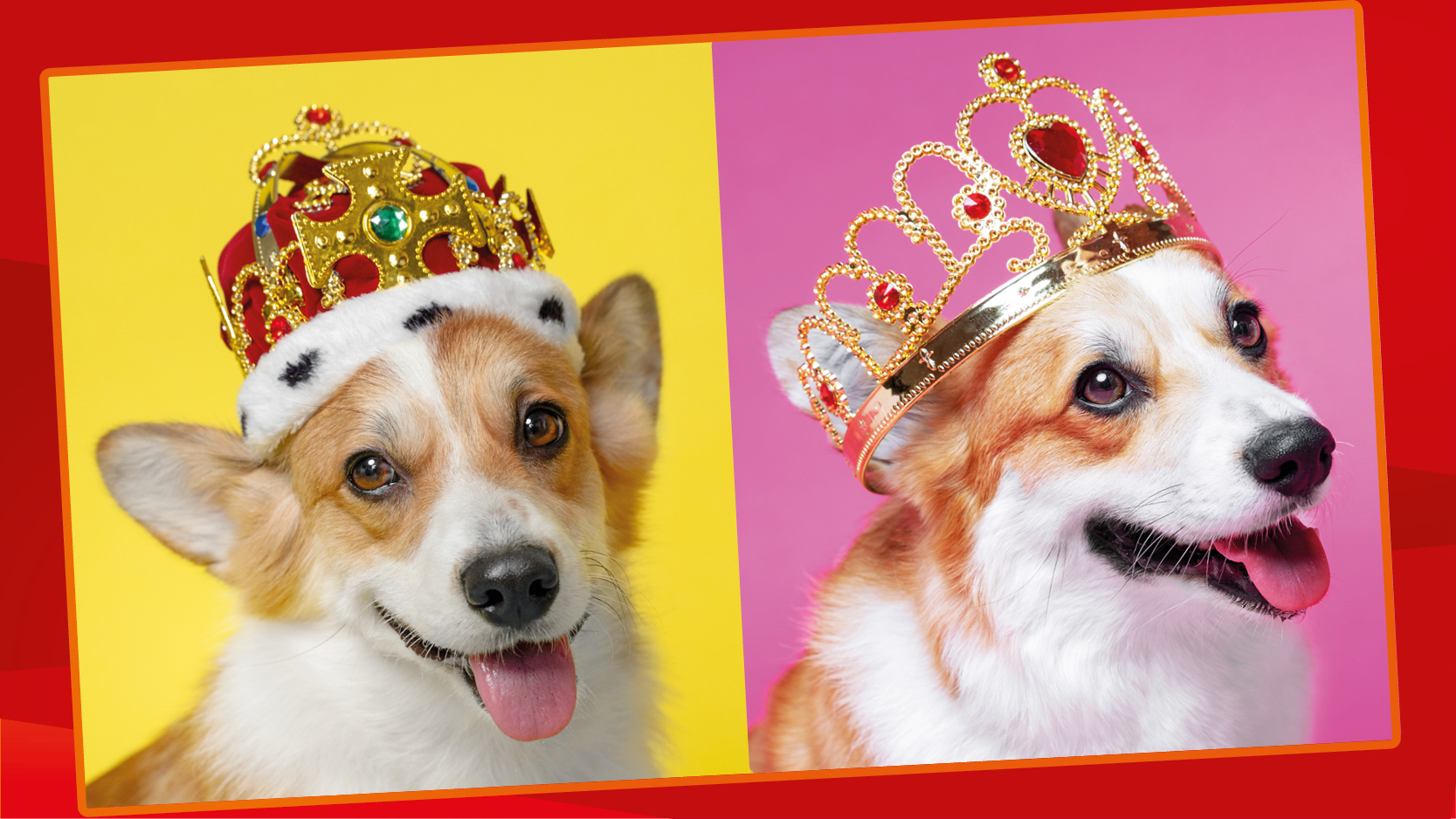 Two corgis against bright pink and yellow background, one wearing a crown and one wearing a tiara